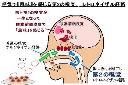 第2の嗅覚レトロネイザル経路