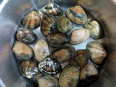 貝が半分浸る水の量で煮るdownsize
