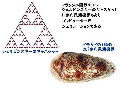 シェルピンスキーのギャスケット模様の貝殻