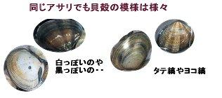 同じアサリでも貝殻模様は様々
