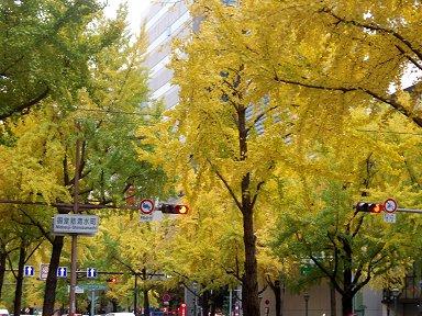 黄金の緞帳のような並木に信号灯が滲む(御堂筋)Bpb291071downsize