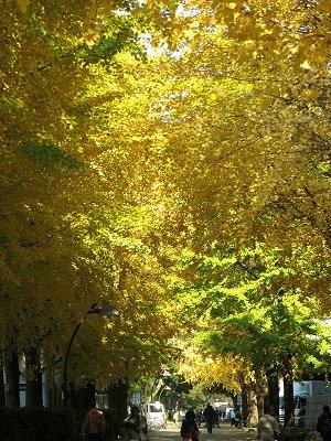緑から黄色へのグラデーションを散策する(上野公園)downsize