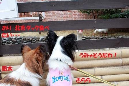 きらら+風太2