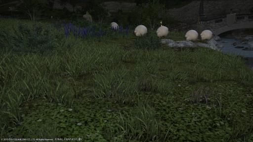 新生14 153日目 羊の群れを見ながらこんばんにゃ~