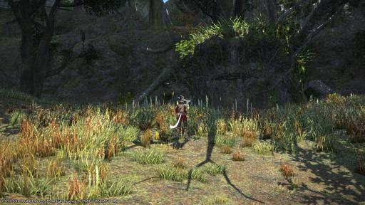 新生14 283日目 トレントに似た木を発見してこんばんにゃ~