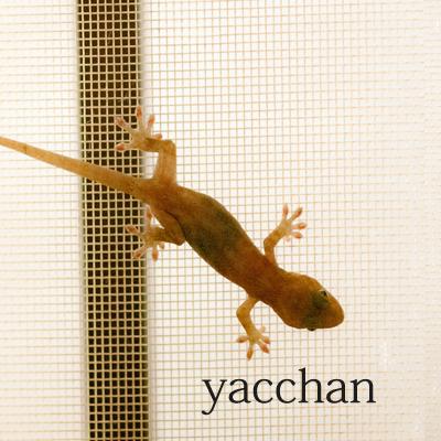 yacchan.jpg