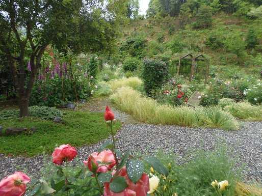20140512 ガーデンの雨