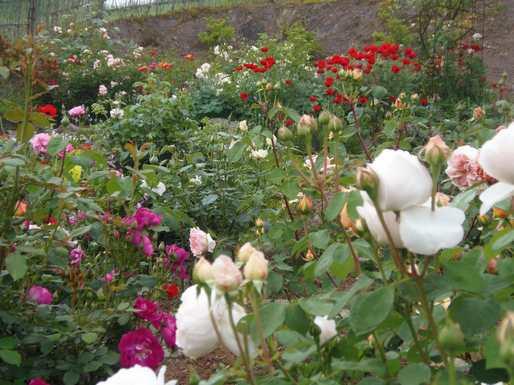 20140515 南の庭