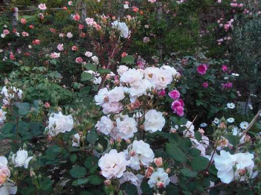 20140515 東の庭