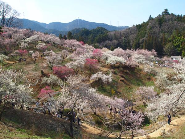 03yoshino1.jpg
