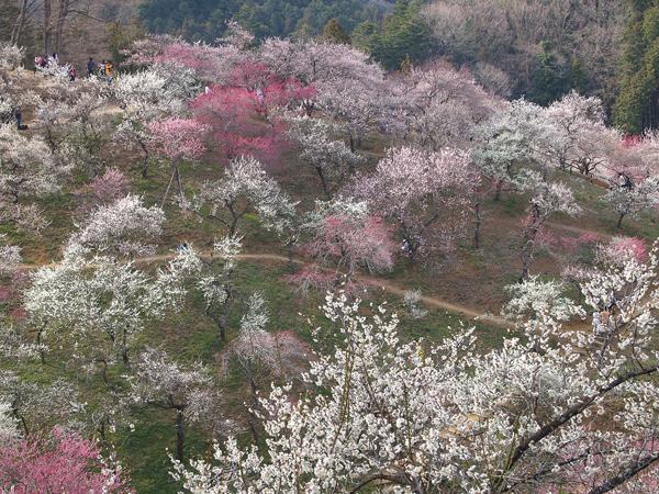03yoshino4.jpg