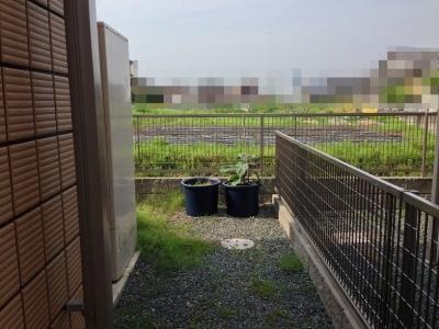 20140603_庭の裏に並んだ大きなプランター