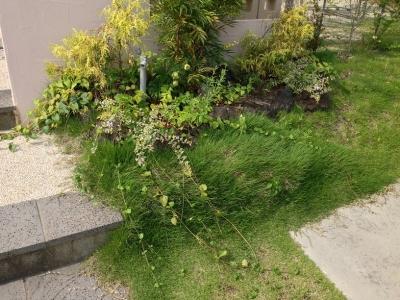 20140702_門柱前の芝