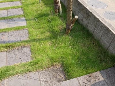20140702_フェニックス周辺の芝