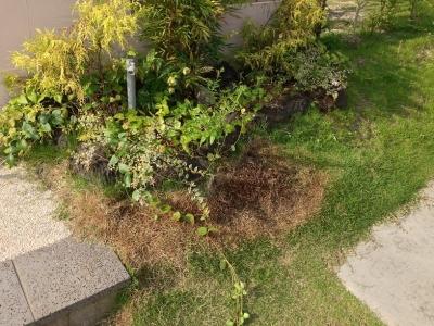 20140702_門柱前の芝(刈った後)