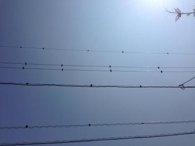 20140721002_鳥ふん対策後