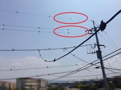 鳥ふん対策後(2階から見た様子:拡大)