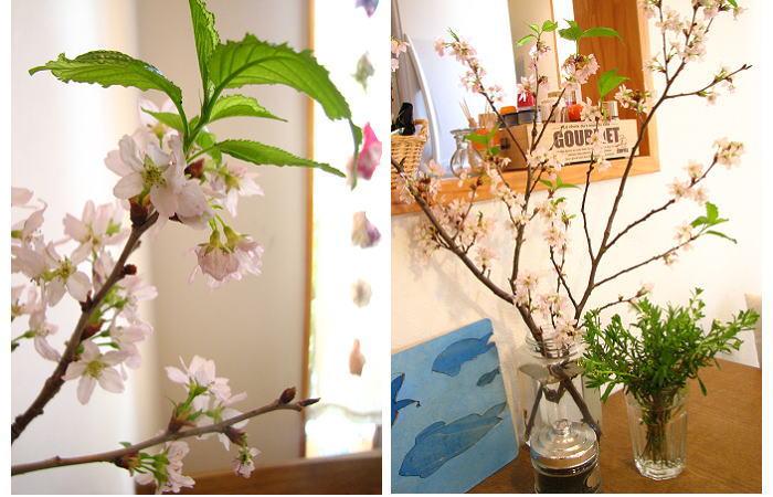 こちらも葉桜