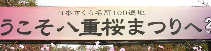 日本の桜百選