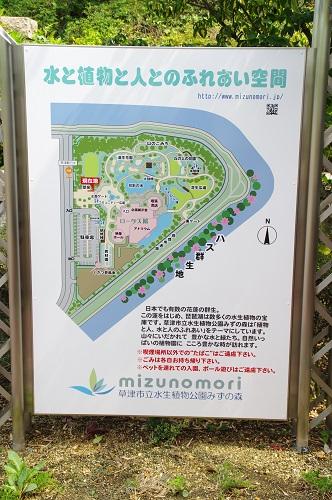 8077水生植物公園水の森