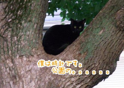 0111 猫時計2