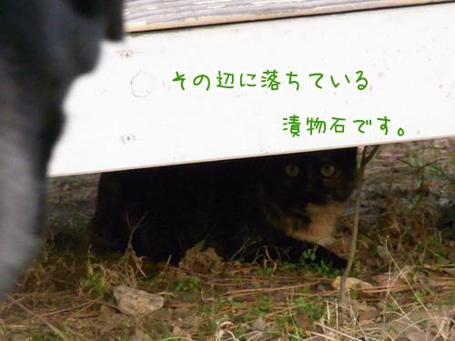 0111 猫時計7