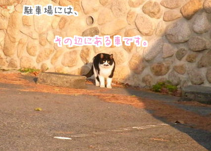 0111 猫時計8