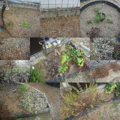 荒れ果てた収穫ガーデン