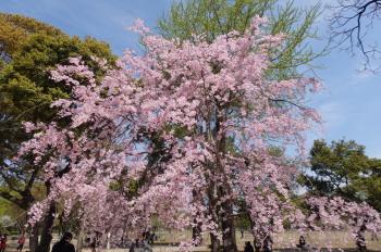 P4010028熊本城二の丸公園