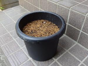 P4110007鉢
