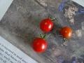 tomato初収穫