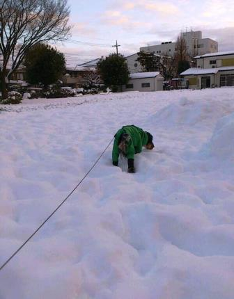 大雪の日1