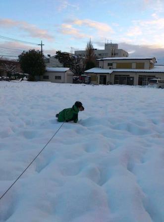 大雪の日2