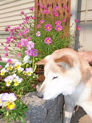 サン花壇で