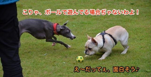 DSC_2939.jpg