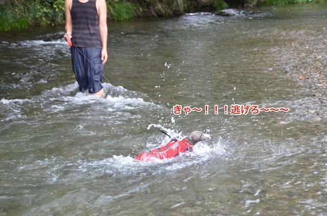 DSC_3274-1.jpg