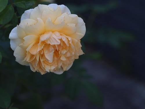 庭の様子6