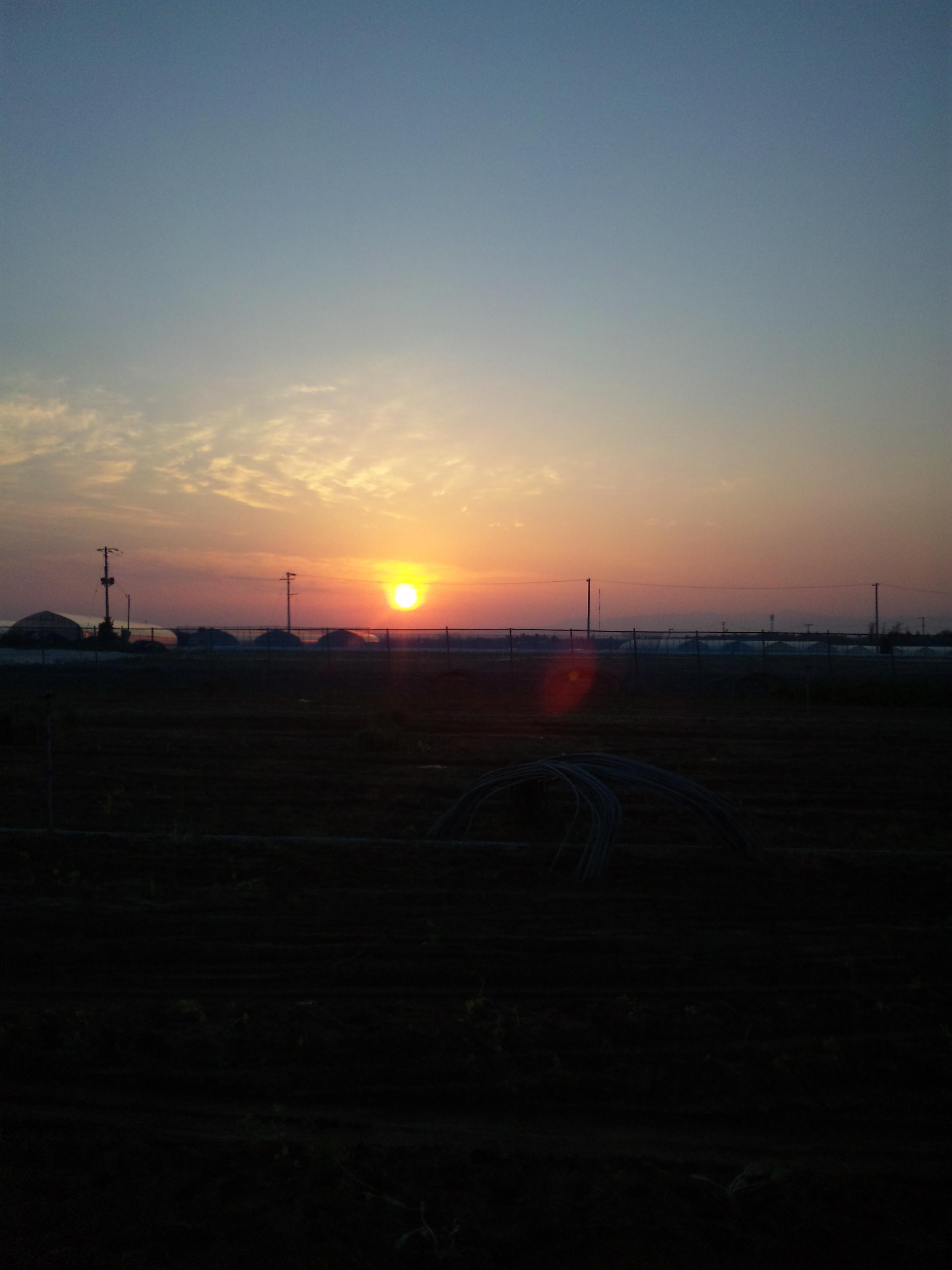 畑から見た朝焼け
