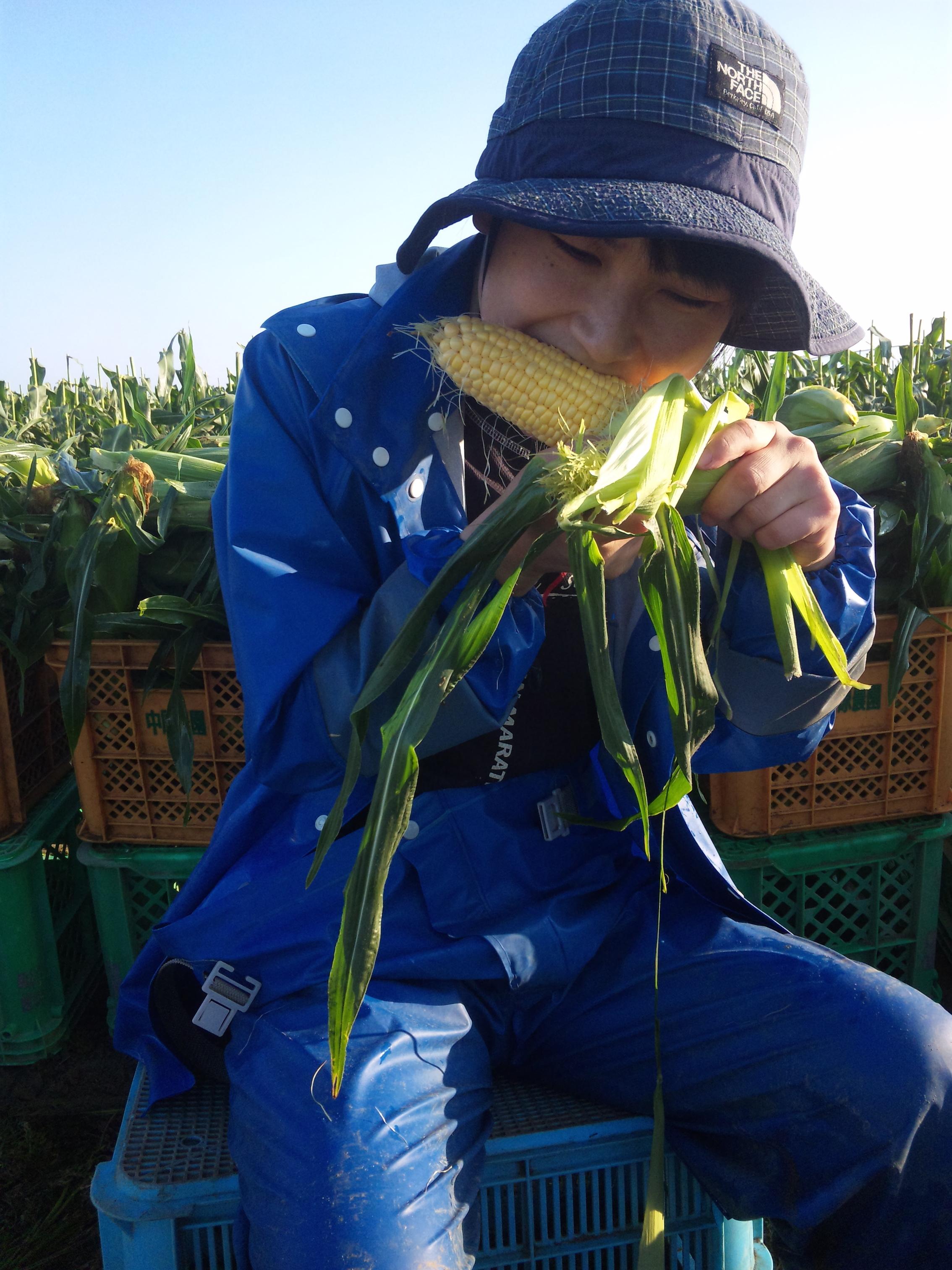 収穫直後のトウモロコシを生でパクリ