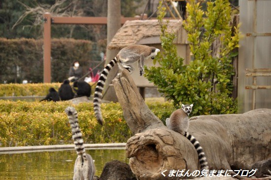 Nikon_20140309_140513.jpg