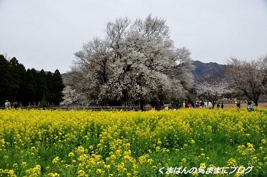 Nikon_20140331_104739.jpg
