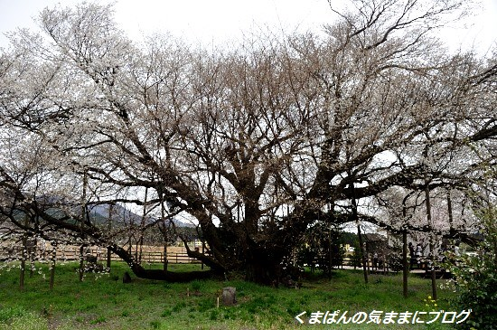 Nikon_20140331_110137.jpg