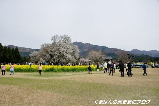 Nikon_20140331_110459.jpg