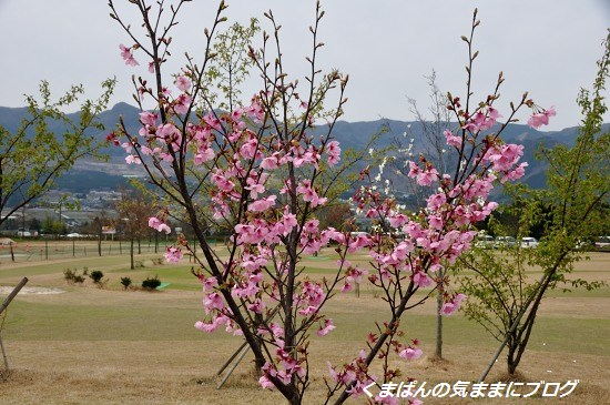 Nikon_20140331_110516.jpg