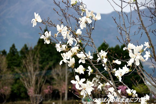 Nikon_20140331_110536.jpg