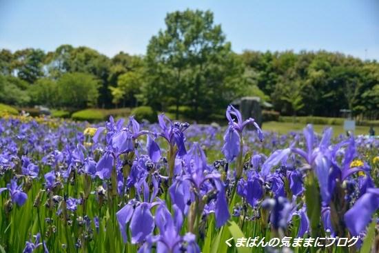 Nikon_20140511_130744.jpg
