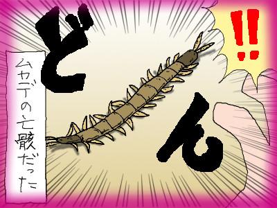 kumapan_mukaeda04.jpg