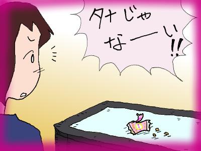 tana_iiwakeayasii02.jpg