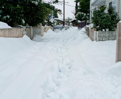 どうするよ、この雪・・