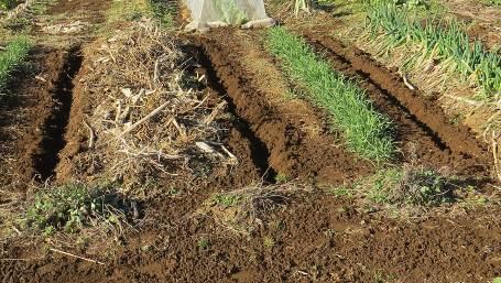 油粕施用後の菜園
